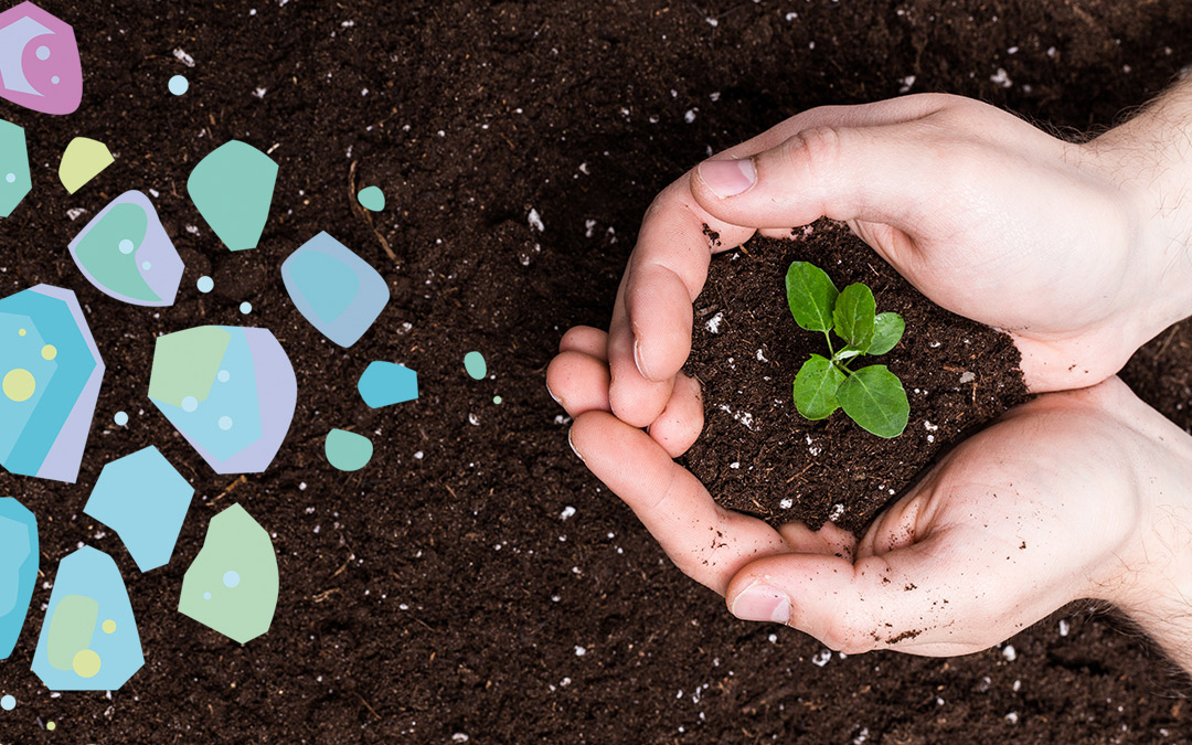 Two hands holding rich, dark soil with a seedling in it showing an understanding for compostability