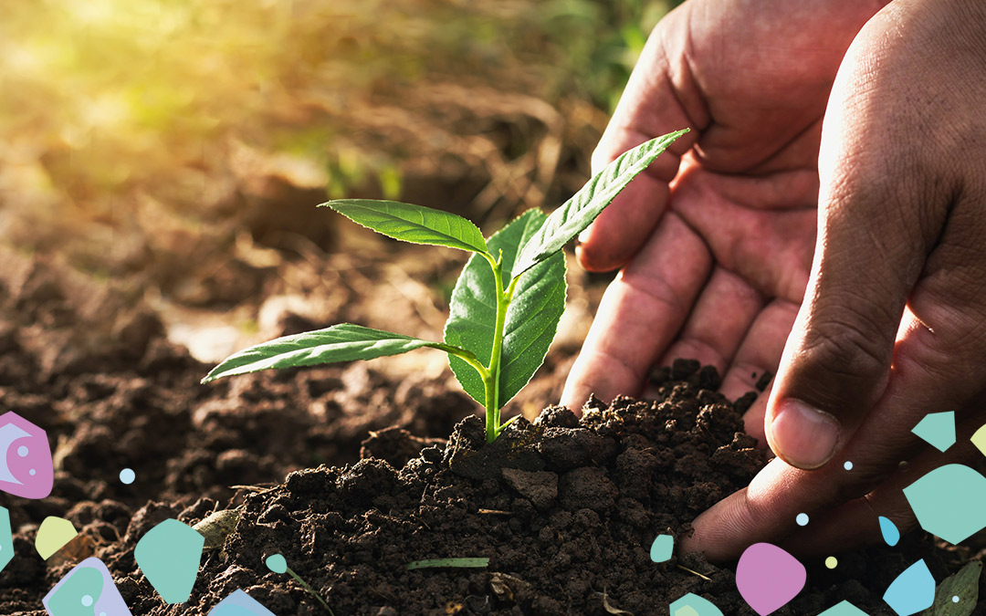A pair of hands putting soil around a seedling, illustrating compostability and its role in environmental change